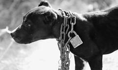 Esclavitud | Slavery