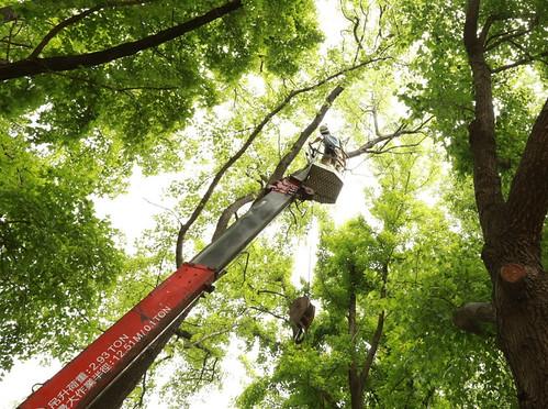 以升降車在巢位旁裝設監視器。攝影:楊明淵。