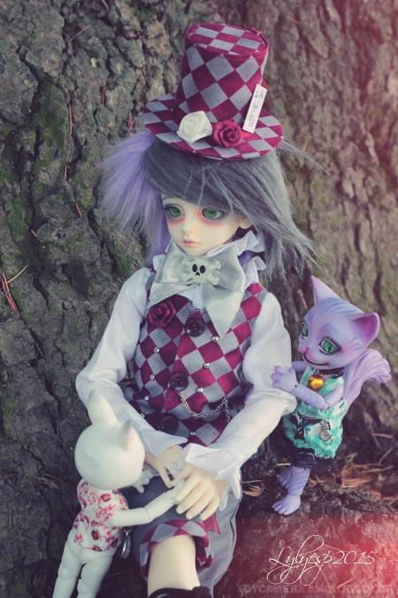 [ Shin - KDF Bory ] Cheshire chaton ? (23/12/2018) 21476988543_c569200604_o