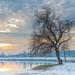 Sumorno stablo by Ana Jurcevic