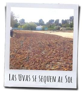 De druiven voor de zoete wijnen liggen op enorme matten van espartogras te drogen in de zon
