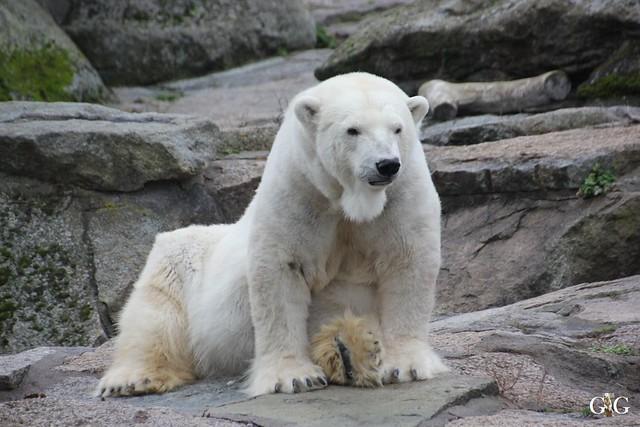 Besuch im Berliner Zoo 06.12.201589