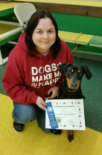 Doberman Puppy with Obedience Certificate and CGC Ribbon - Lapdog Creations
