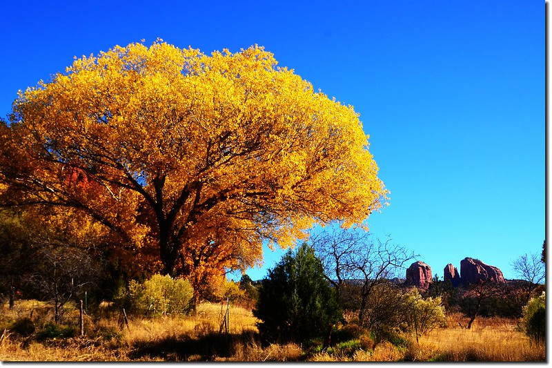 Cottonwood & Cathedral Rock  (9)