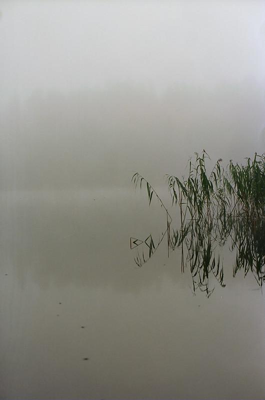 3. wood water