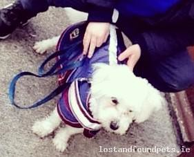 Mon, Dec 19th, 2016 Lost Male Dog - Dun N Or Donaskeigh, Tipperary Town