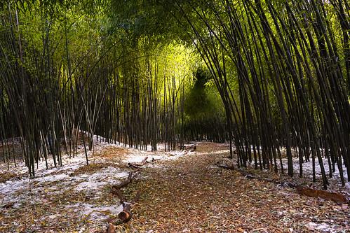 nikon28mmf28ais bamboo nature landscape rutgersgardens trail intimatelandscape eastbrunswick newjersey unitedstates us