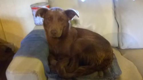 [Reunited] Wed, Mar 29th, 2017 Found Female Dog - Ballinarid, Bunmahon, Waterford