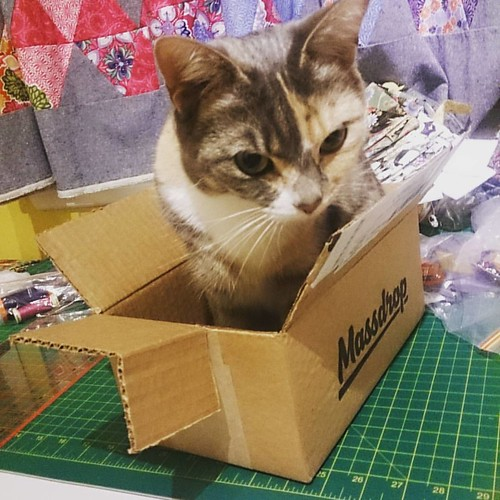 A wonderfully effective cat trap! #catsofinstagram #cats #advenchuresofsmokeyandmal  #massdrop