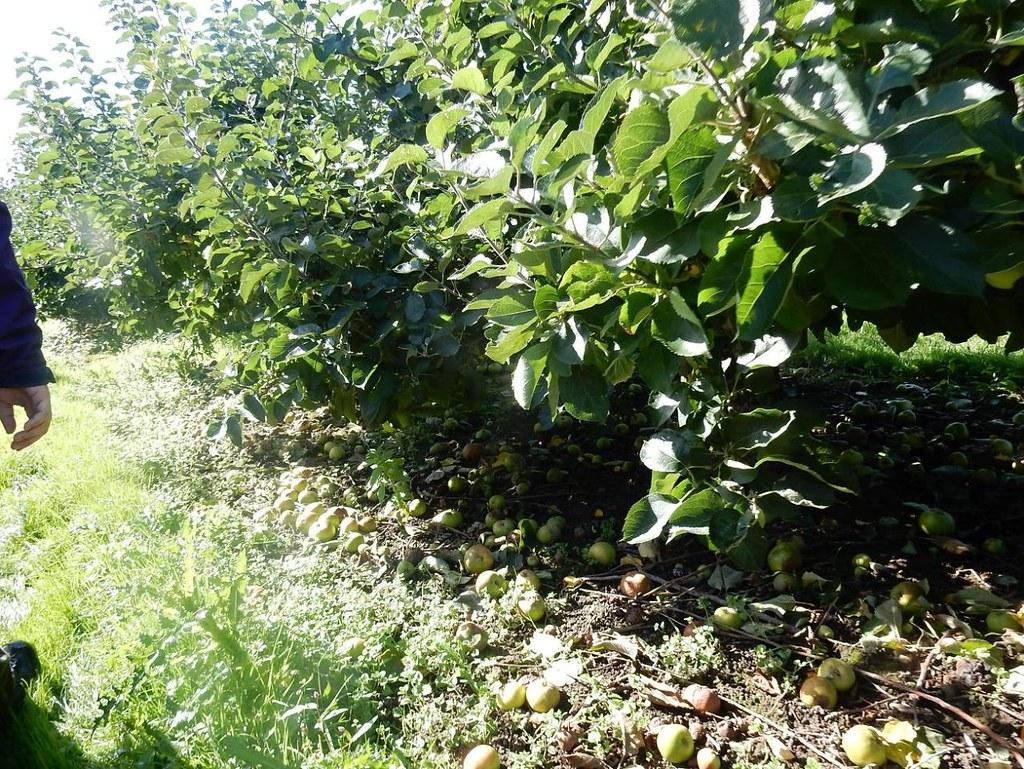 In the Orchard Borough Green to Sevenoaks