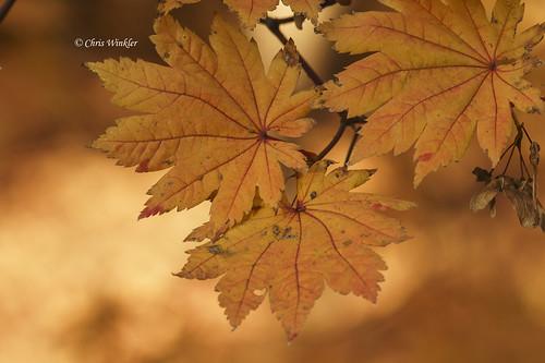 Yellow Autumn 黄色の秋
