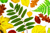 Back lit leaves by darrenball189