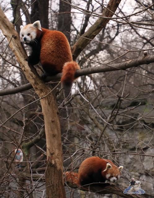 Tierpark Berlin 22.11.2015   021