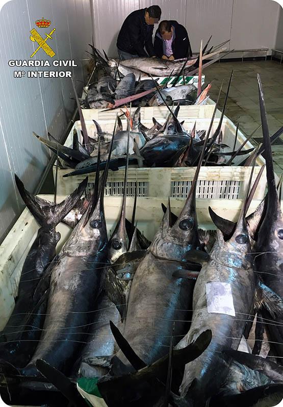Interceptan cuatro embarcaciones con tonelada y media de pez espada capturado ilegalmente