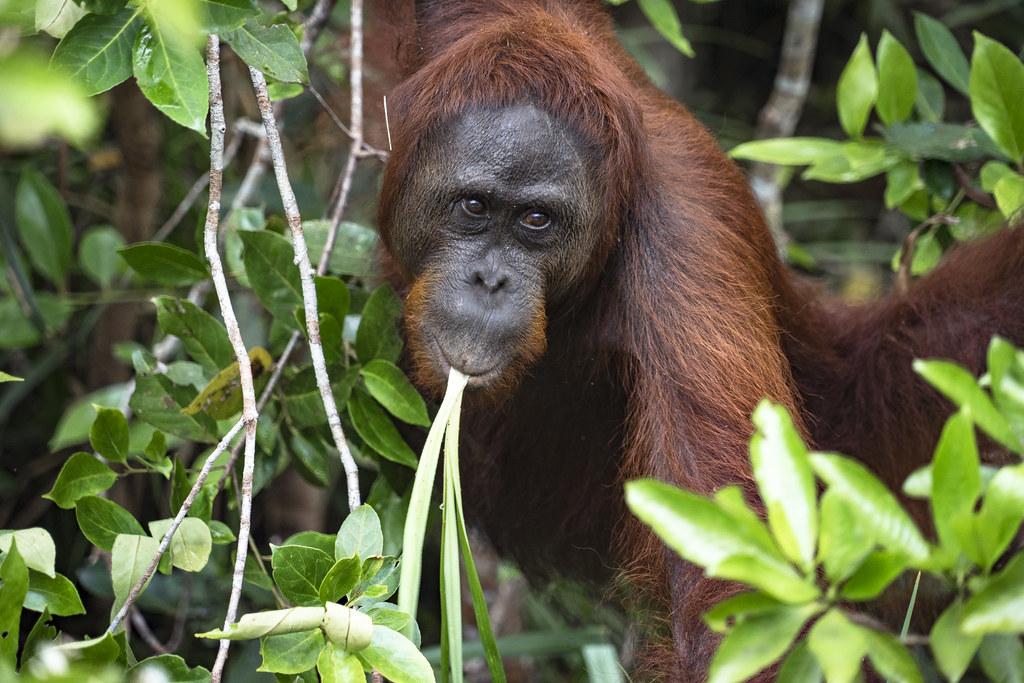 Kalimantan Borneo