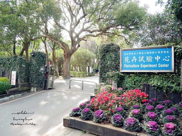 陽明山一日遊免門票景點花卉試驗中心 (1)