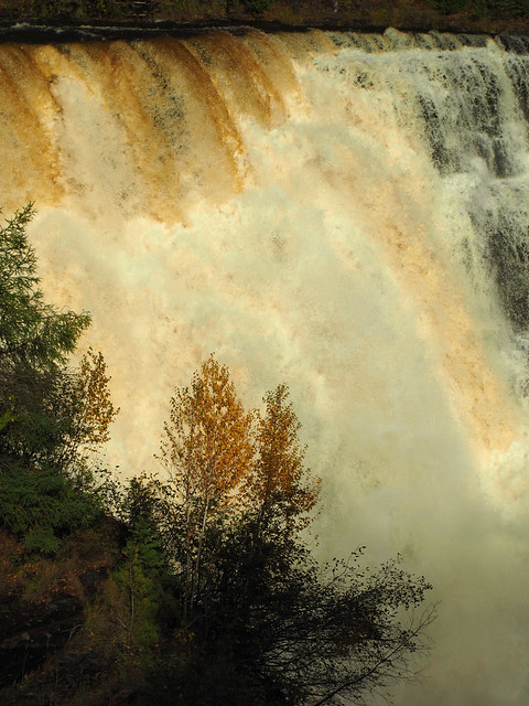 Kakabeka Falls with an orange birch
