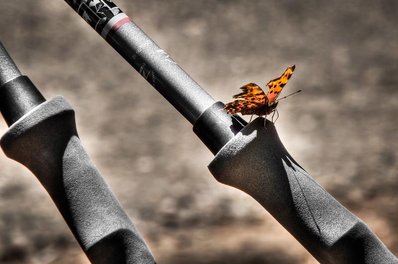 Flutterby Little Butterfly