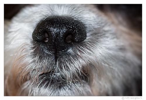 dog hair nose us louisiana unitedstates a77 kentwood goatrunfarm sigma105oshsm bodesnout