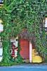Vine Door by graphicsgirl925