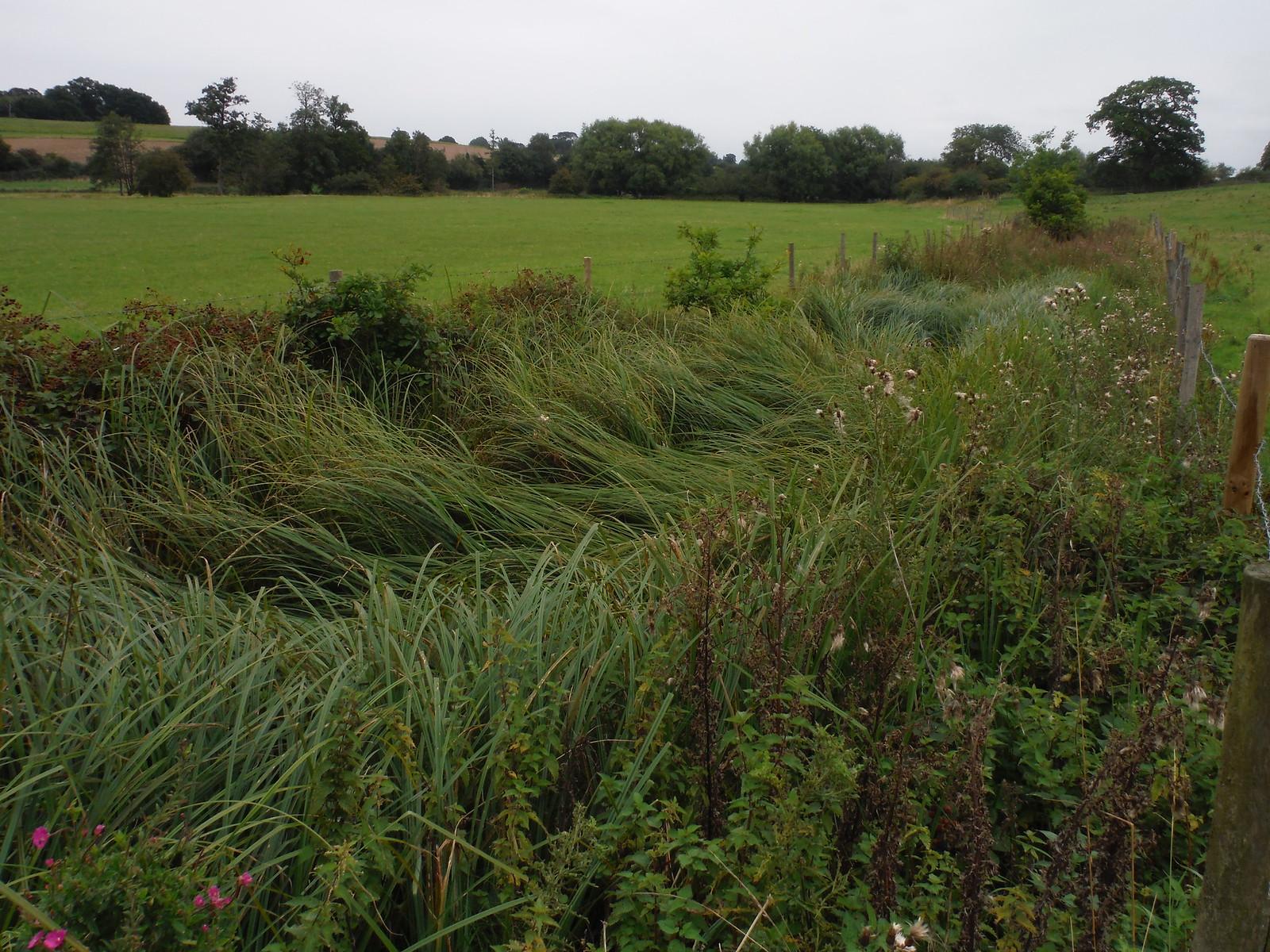 Ditch in the Ash Valley SWC Walk 164 Roydon to Sawbridgeworth via Henry Moore Foundation