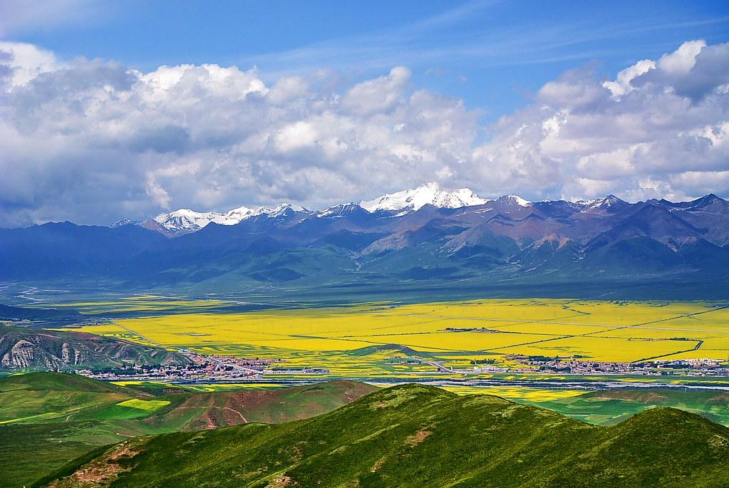 这是祁连县的卓尔山景区,和门源县的万亩油菜花田景区.
