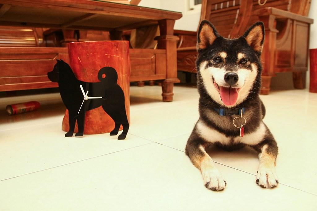 柴犬時鐘 (12)