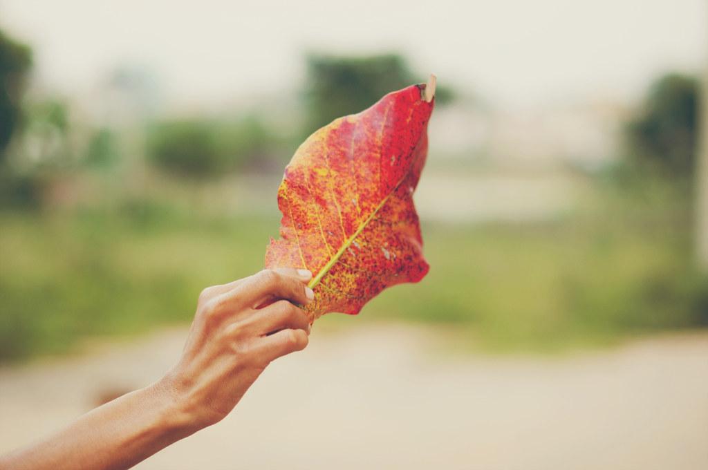 Day 272.365 - Autumn