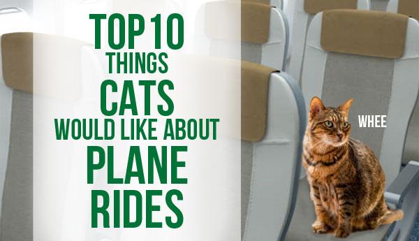 top-10-cat-plane-rides