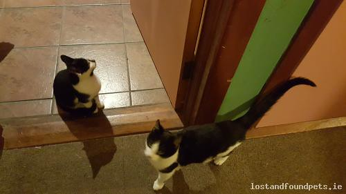 Sun, Oct 18th, 2015 Found Male Cat - Pudden Hill, Ashbourne, Meath