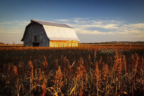 American Landscape, USA, Midwest, America, Mid-America, Notley, Notley Hawkins, 10thavenue http://www.notleyhawkins.com/, Missouri Photography, Notley Hawkins Photography, Rural Photography, Milo, Barn, Farm, Field, rural, River Bottoms, Boone County Missouri, Hartsburg Missouri, 2015, November, Fall, Harvest, farm field, serene, bucolic, landscape, building, architecture, sky