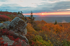 Autumn Dolly Sods Sunrise