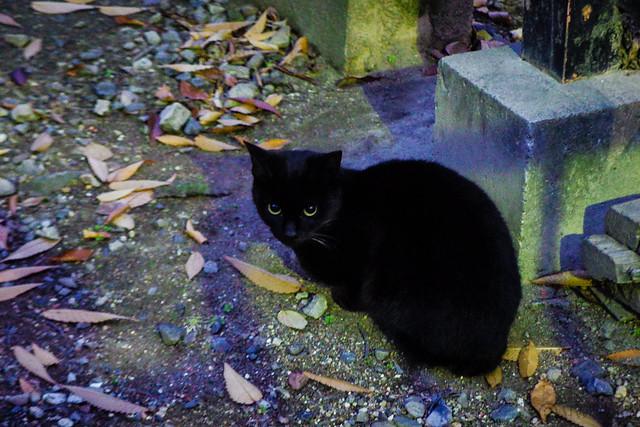 Today's Cat@2015-12-09