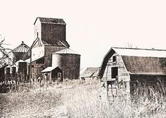 455 - Hollinger, Nebraska - Lith Print