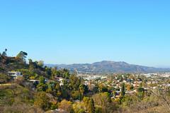 LA Landscape 2