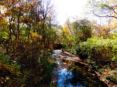 Wantagh - Twin Lakes Preserve - Autumn (74)