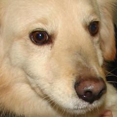 Tredici nuovi esemplari, pronti per l'adozione, ospitati nel Canile Sanitario