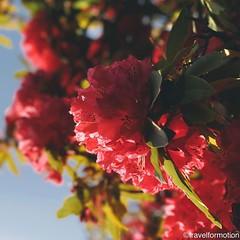 I could #feel the #spring #flowers #colours #porto #oporto #porto_ig #visitporto #portugal #loves_porto #portolovers #wanderlust #travel #travelgram #vsco #vscocam #guardiantravelsnaps #guardiancities #citytrip #travelphotography #igers_porto #visitportoa