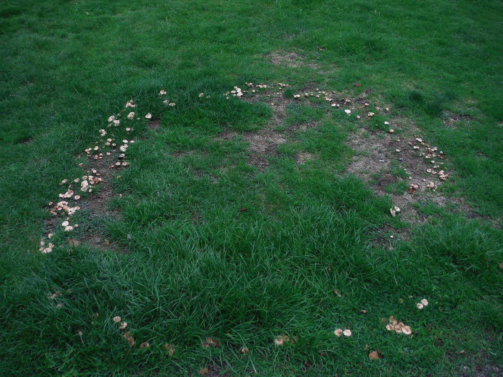 Mushrooms SWC Walk 164 Roydon to Sawbridgeworth via Henry Moore Foundation