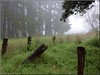 Blackwood Forest Foggy Morning Aug 15- Hilary Thompson 049