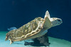 Turtle in Birch Aquarium by tobiasw