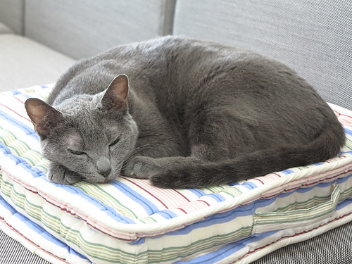 Sarantoya on her own pillow
