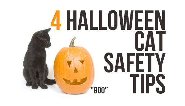 halloween-cat-safety-4-tips