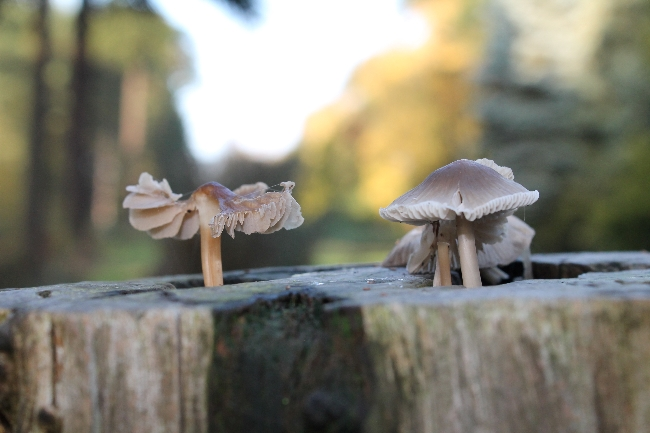 mushrooms via lovebirds vintage