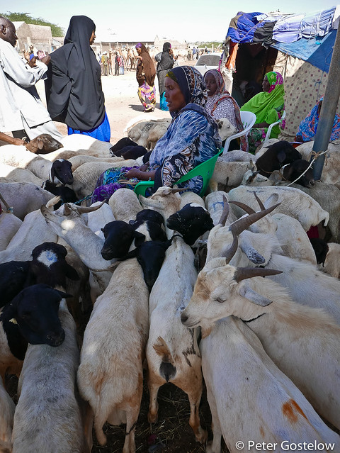 Goats for sale in Hargeisa.