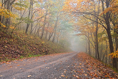 Misty Autumn Forest Road - Dolly Sods