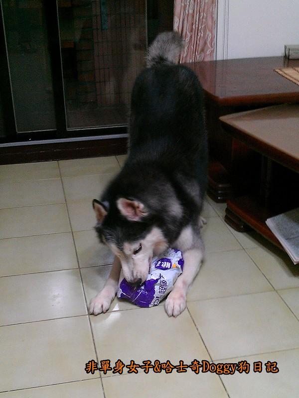 doggy黃色小鴨鞋02