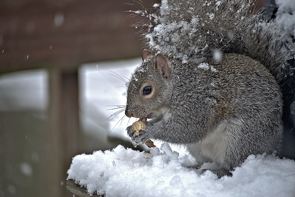 Snow and Squirrel