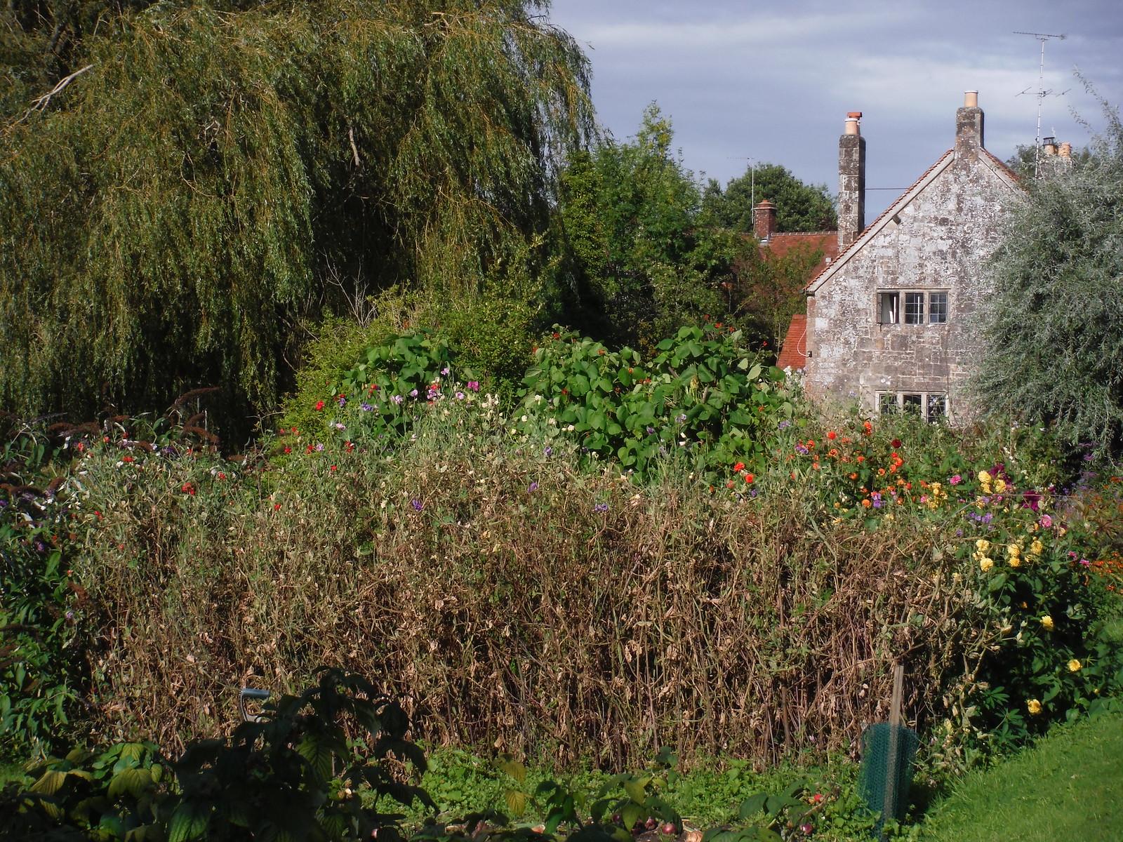 Garden Detail, Tisbury Mill (III) SWC Walk 248 Tisbury Circular via Hindon