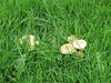 Toadstool patch IMG_6206 by tomylees